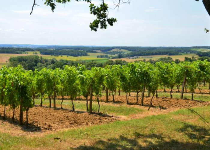 image de Saint-Jean-de-Duras, balade au coeur des vignobles de Duras