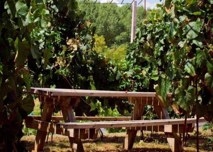 image de Aire de pique-nique à la Maison des Vins