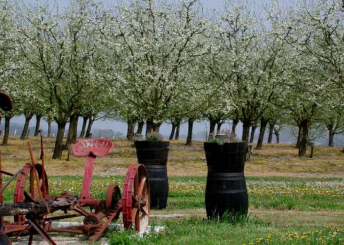 image de Saint-Astier-de-Duras, à travers vignobles et vergers de Duras