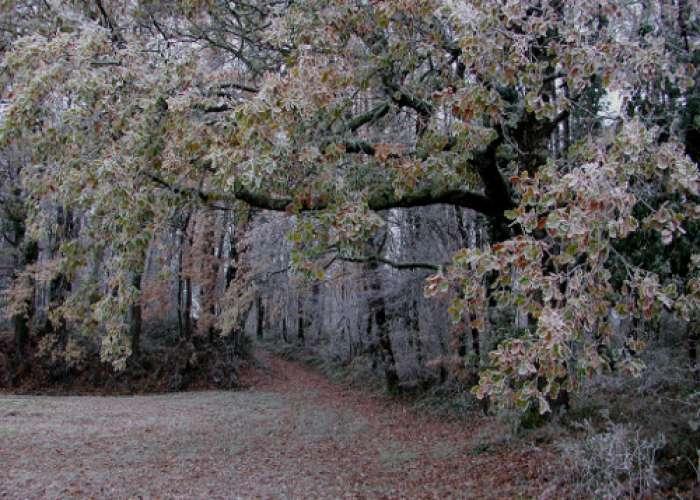 image de Saint-Léger, entre bois, vignes et vergers de pruniers